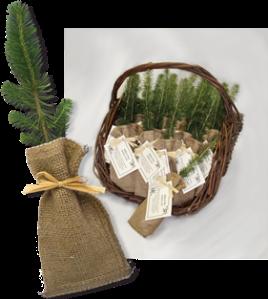 Biodegradable Tree Seedling