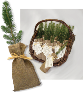 Tree Seedling funeral favor