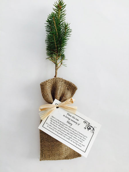 Memorial tree seedlings wrapped in burlap